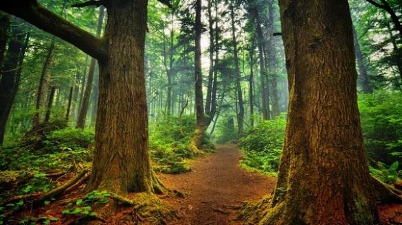 Veja o caminho sem deixar de ver o todo.
